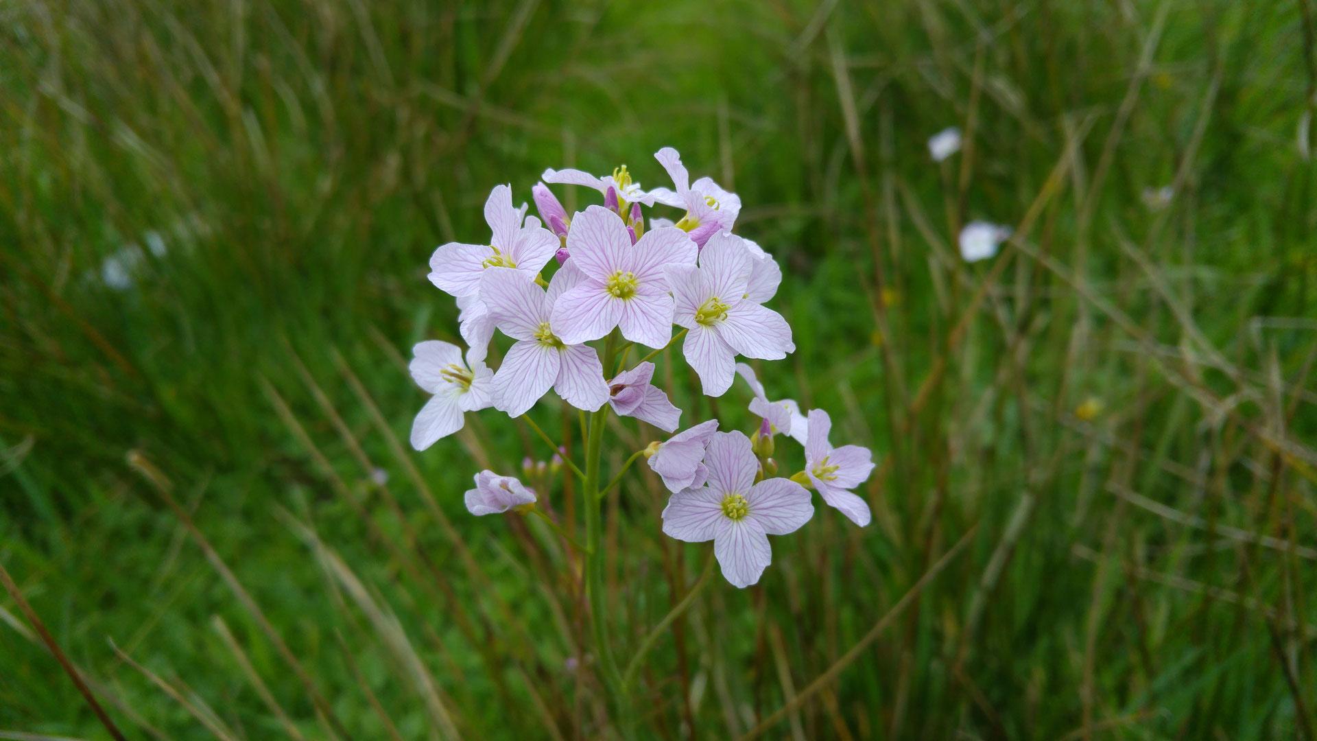 Fruhbluhende Pflanzen Nabu Leopoldshoehes Webseite