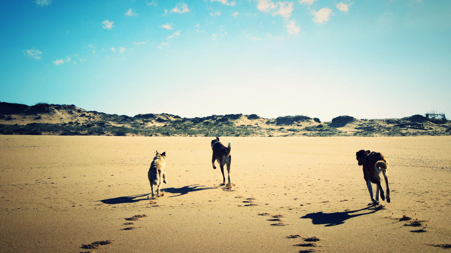 Bewegung ist Fortschritt - Hundeschule - Wohnmobil Reiseführer