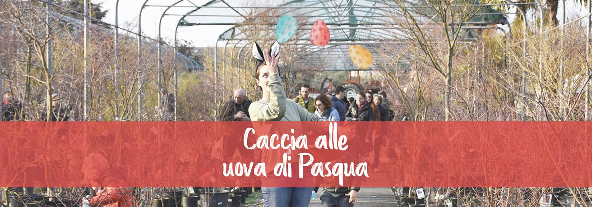 Piante Da Regalare A Pasqua caccia alle uova di pasqua - floricoltura la gemma.cernusco