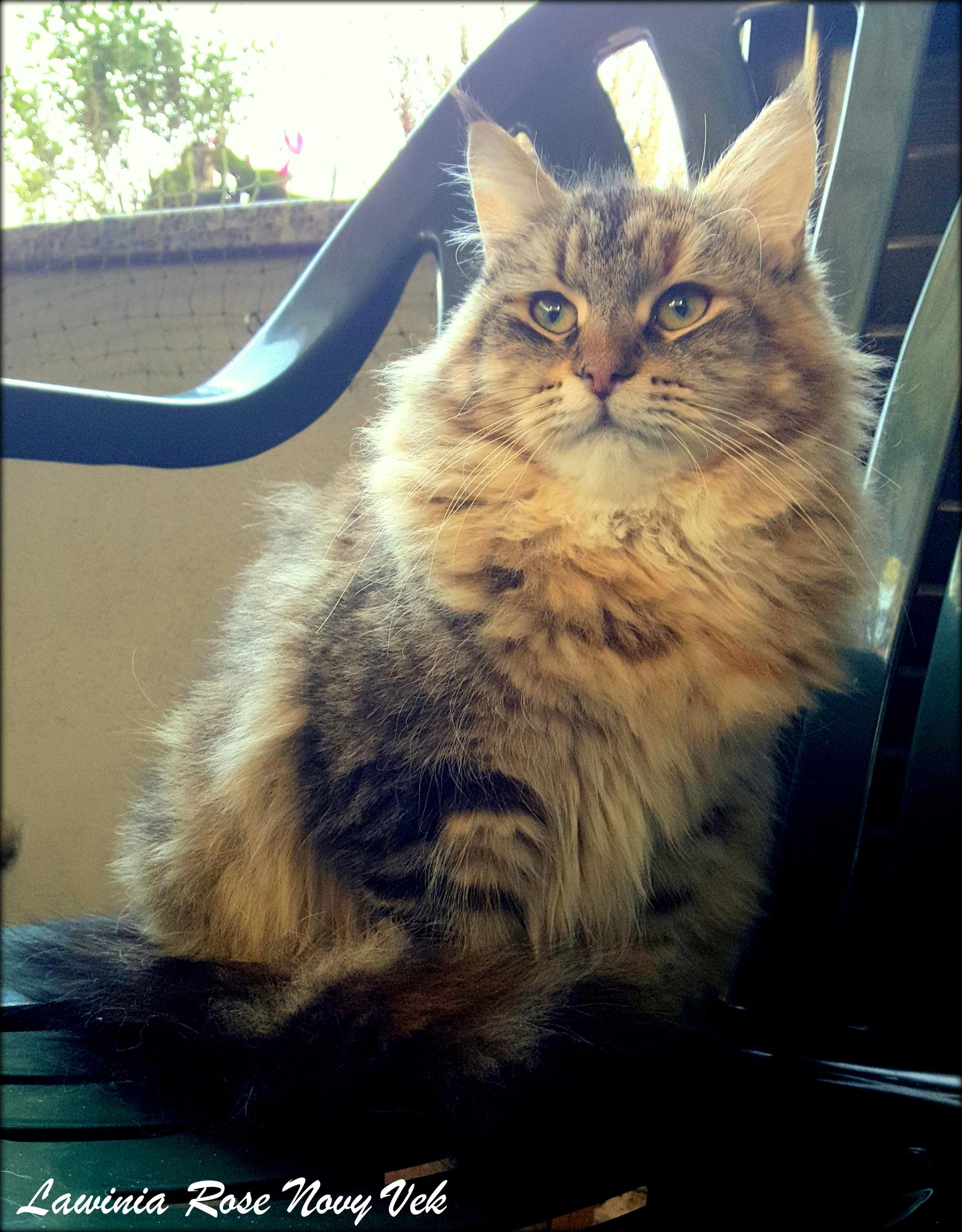 Allevamento gatti siberiani - Allontanare i gatti dal giardino ...