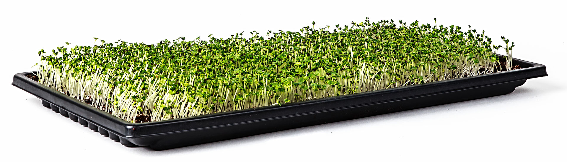 Double Thick Microgreen Trays Now Available