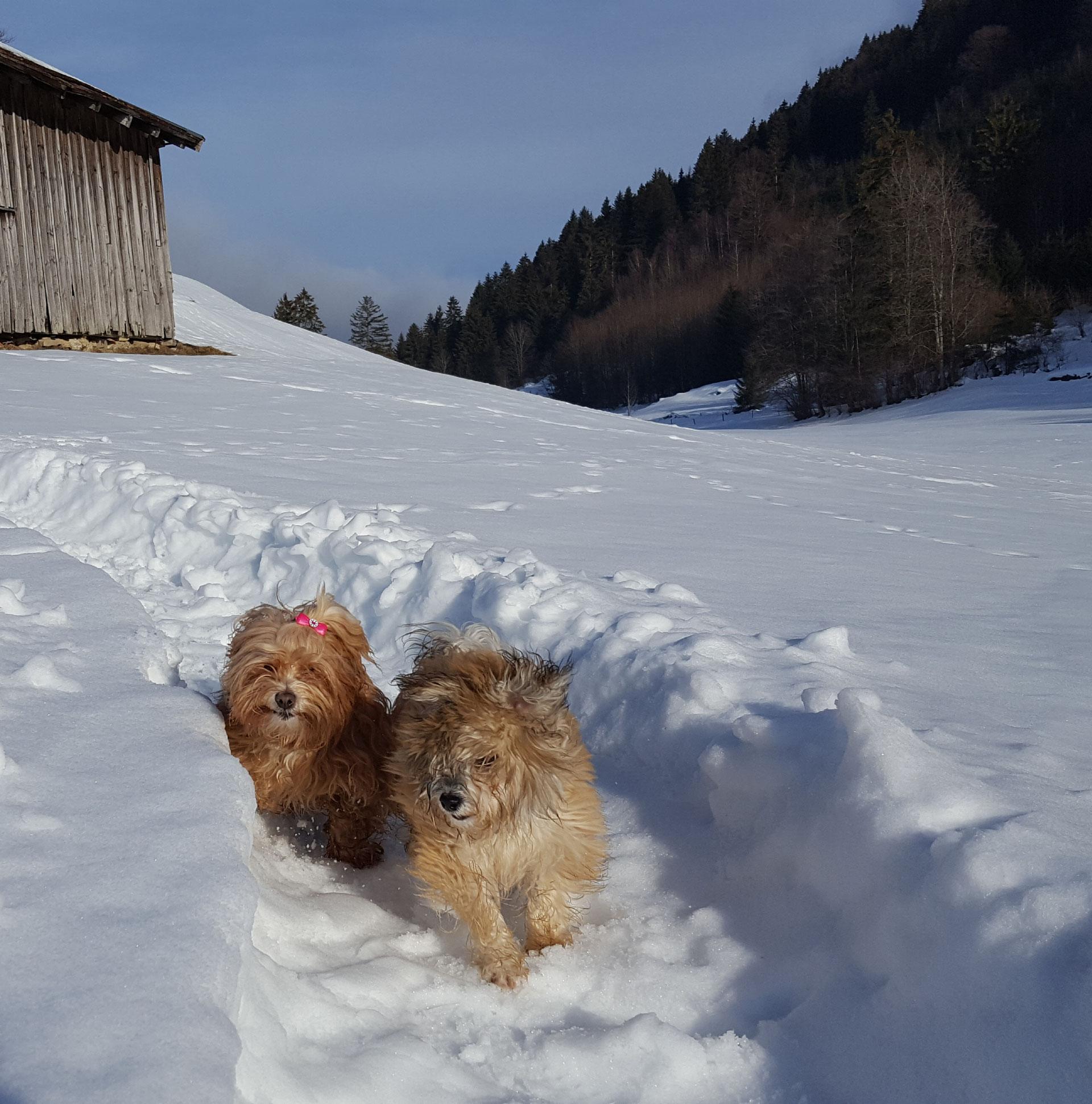 Urlaub Mit Hund Eingezäunter Garten: Aktuelle Neuigkeiten Aus Dem Landhaus Jörg Im Allgäu