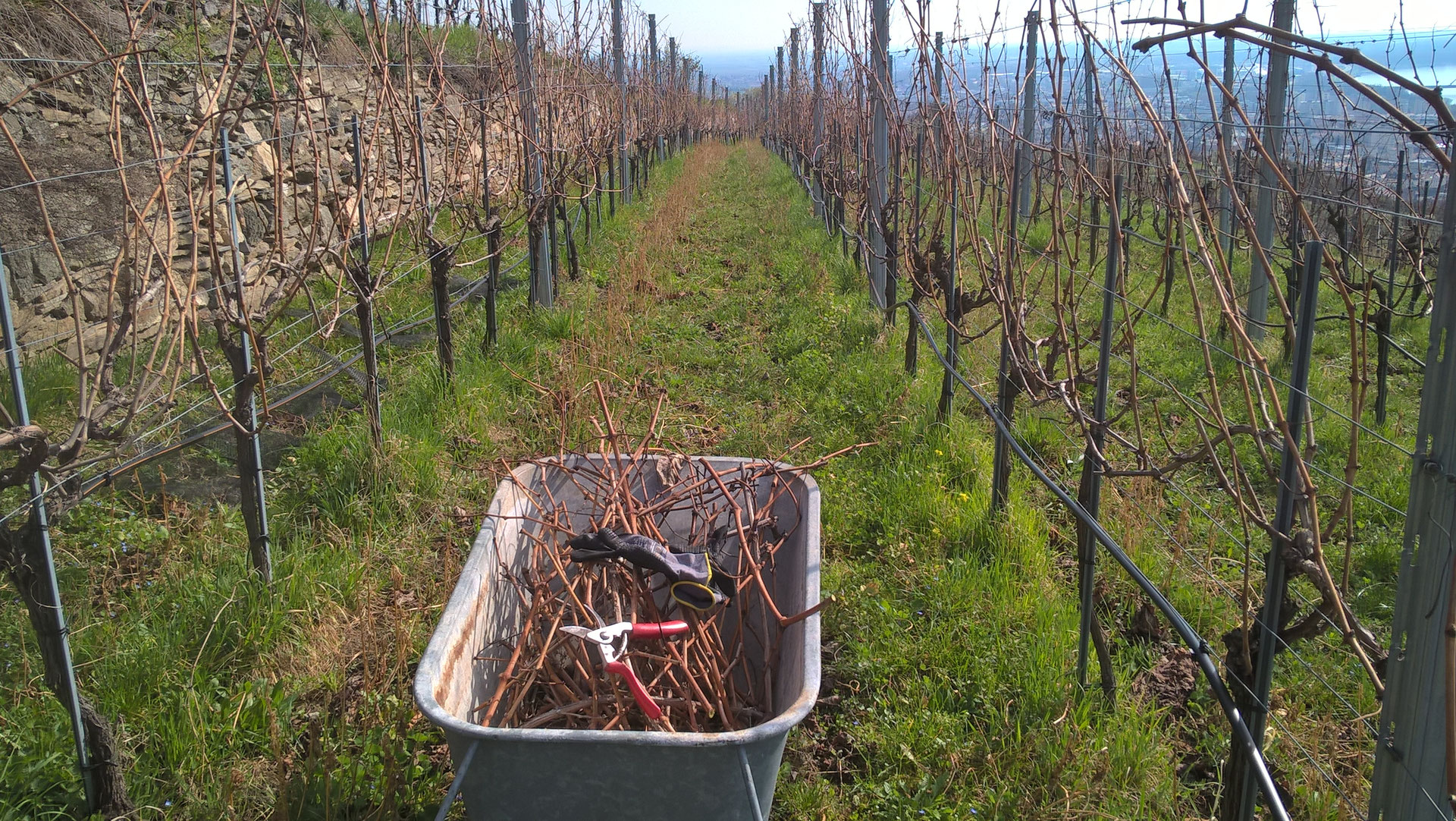 Jahresverlauf 2016 - Weinbau Franz Karl - Mein Wein