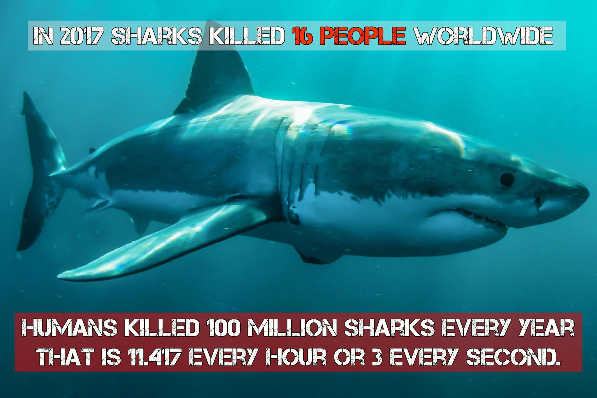 Overbevissing & vervuiling | Animal Care International - ACI