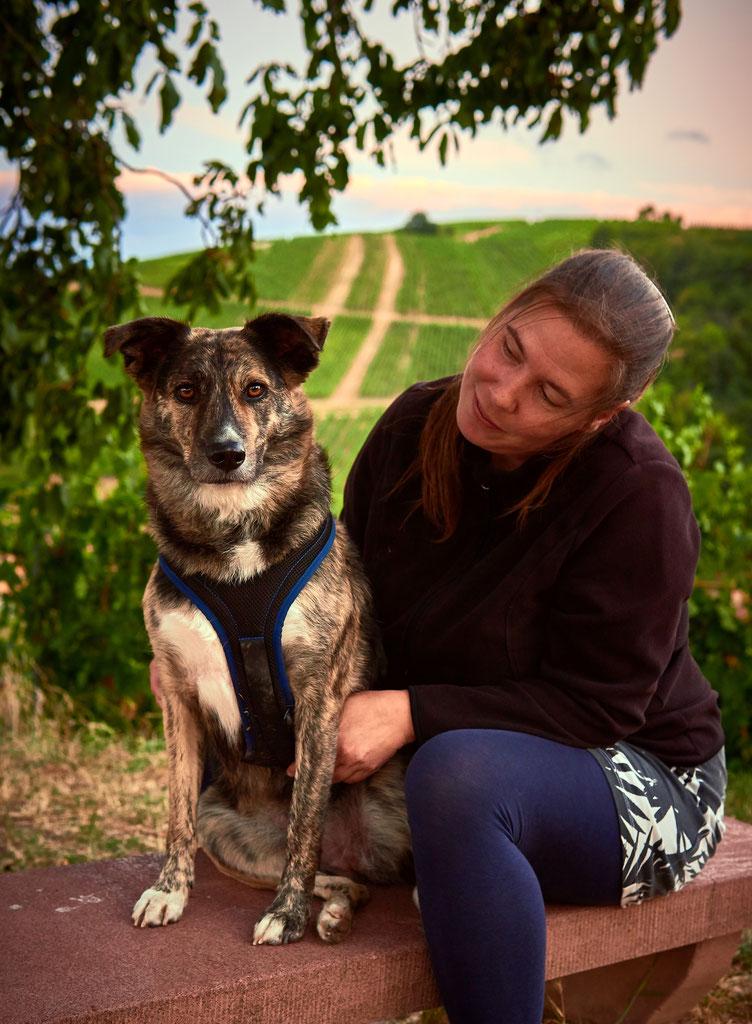 Traumatisierter Hund Symptome