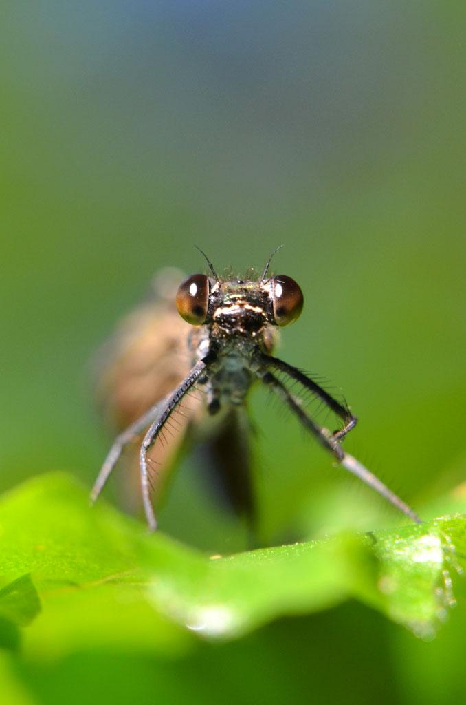 Entomologen