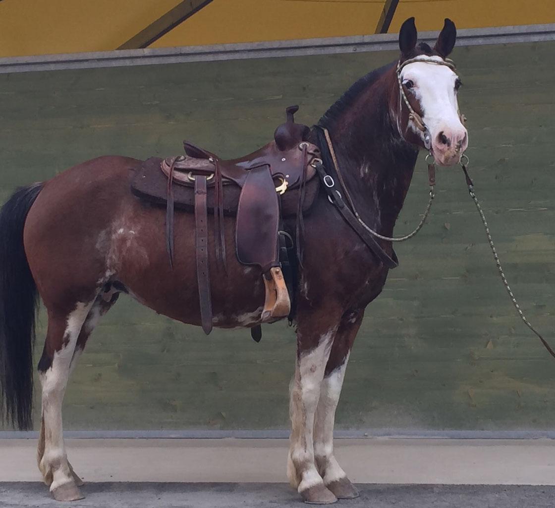 Argentini Criolli Cruzadi Appennino Horse Trekking