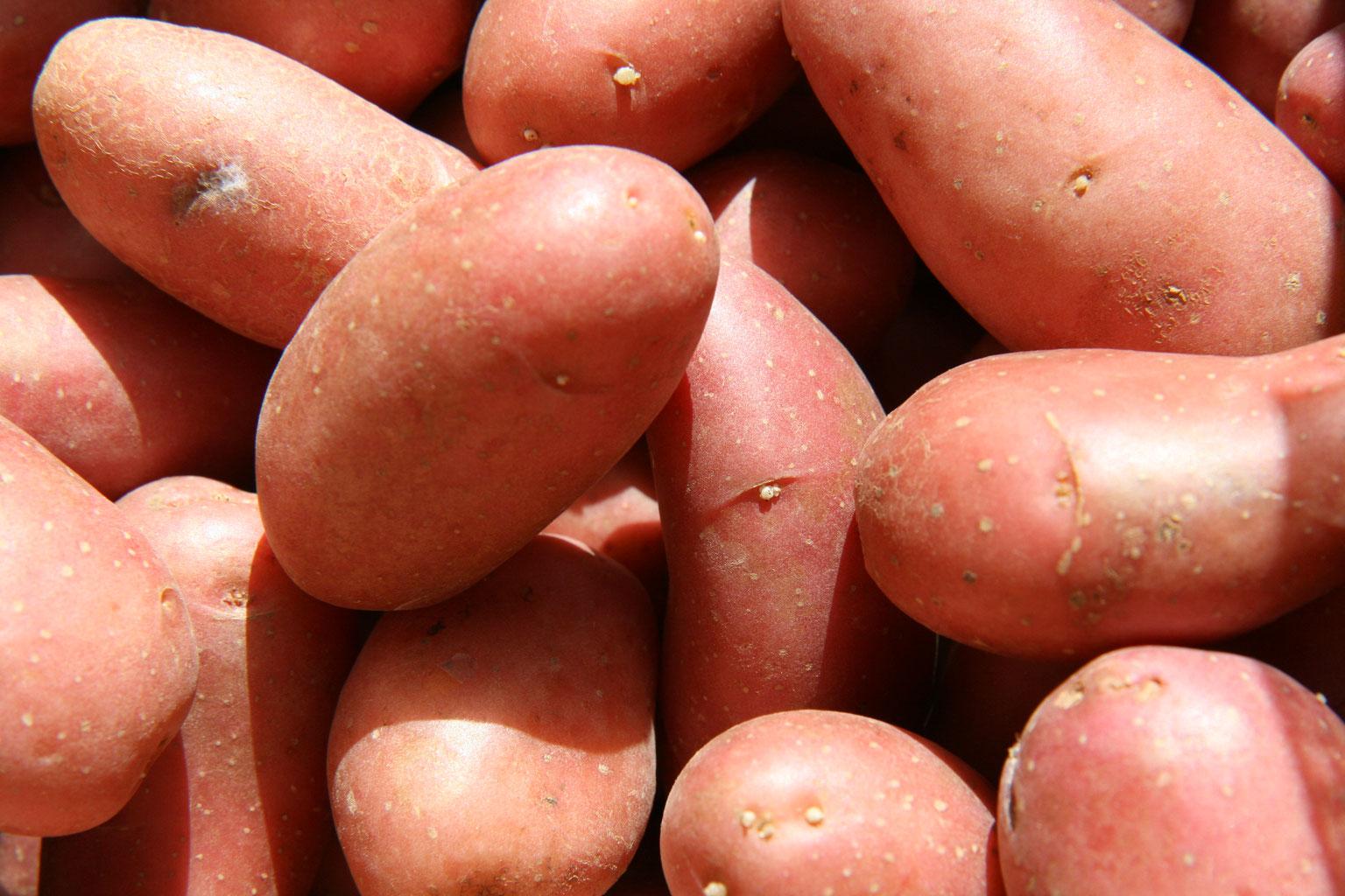 Laura Kartoffeln Aus Sorsum Georg Wöltje