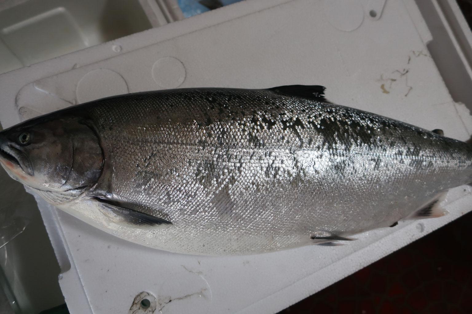 株式会社さんの水産 小田原(相模湾)朝どれ天然魚