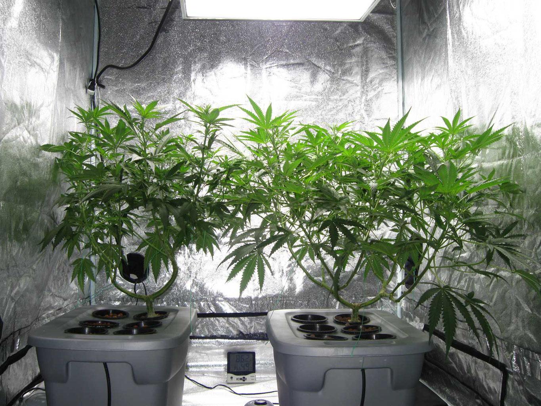 cannabis indoor anbau systeme einsteiger anleitung irierebel. Black Bedroom Furniture Sets. Home Design Ideas