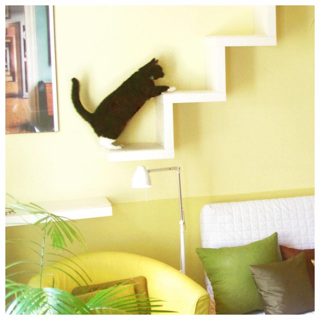 r ume f r katzen miezraum raumdesign f r katzenfreunde. Black Bedroom Furniture Sets. Home Design Ideas