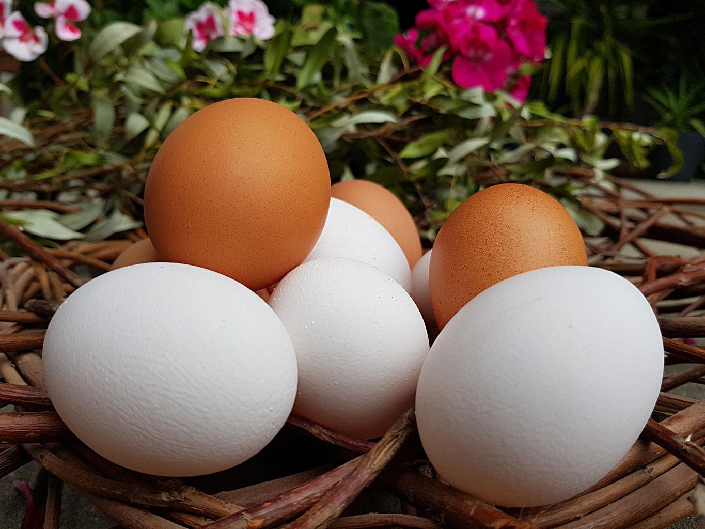 Grüne Eierschale Hühnerrasse
