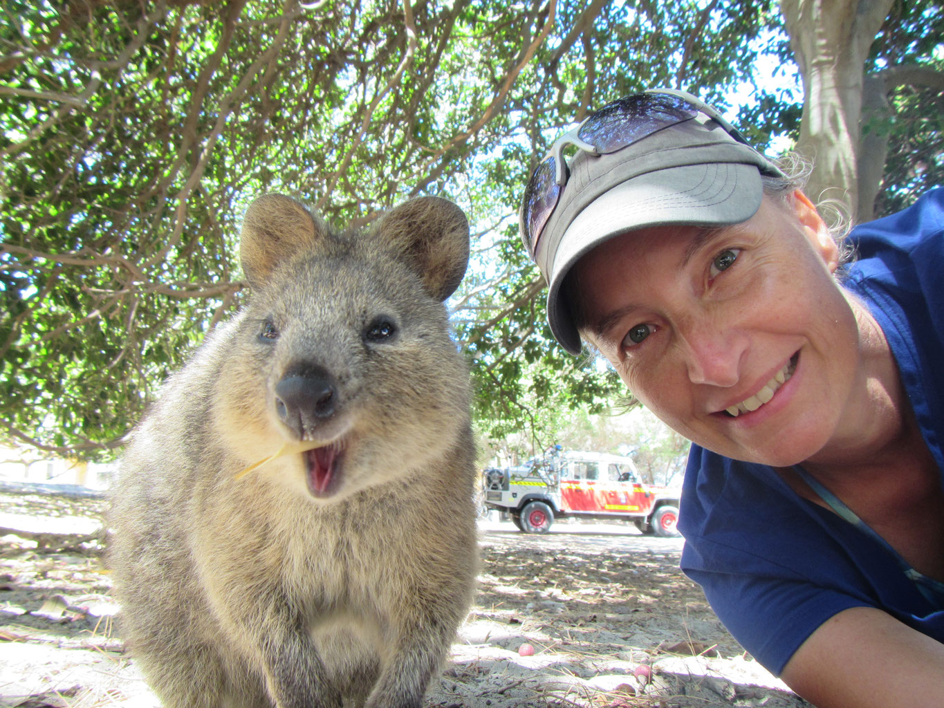 Quokka Selfie & Birthday on Rottnest Island - Silke Touch ...