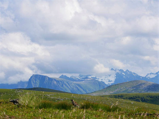 Goldregenpfeifer, in den Sunnmore-Alpen hängen noch Wolken