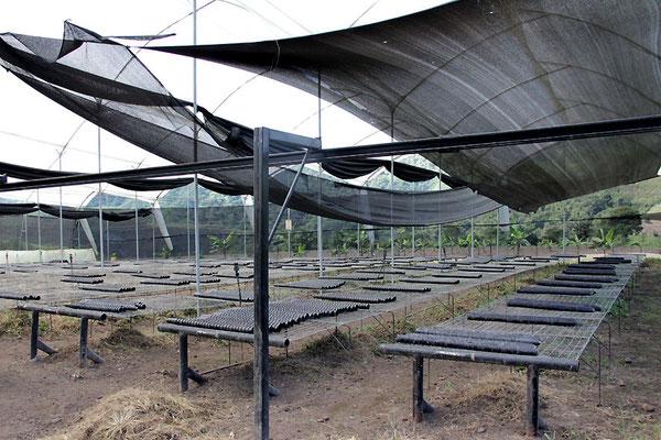 Vivero (Pflanzenzuchtanlage) der AACRI
