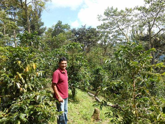 Marcelo in mitten seiner Kaffeepflanzen
