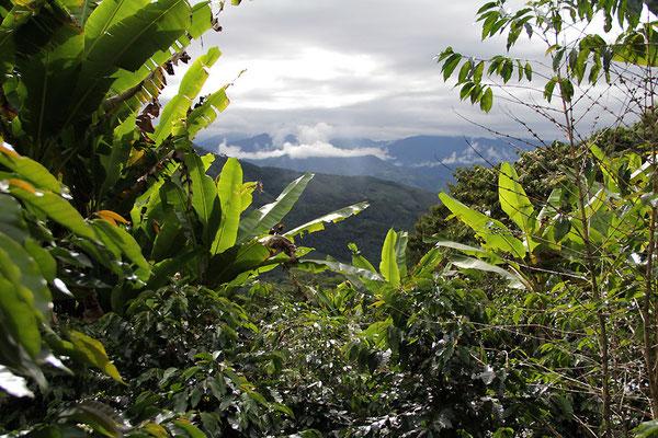 Landschaft bei Zumba im Kaffeefeld