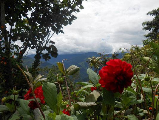Garten von Marcelo Delagado