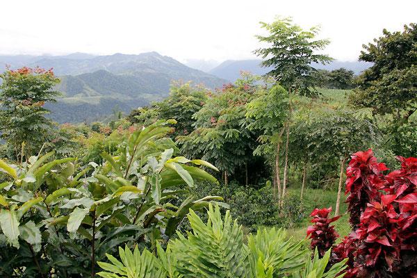 Blick von der Finca Maputo