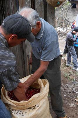 Agapito und sein Schwiegersohn Marcos Juarez beim Check der gesammelten Kirschen
