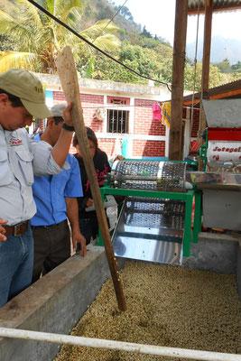 Jose testet den Status der Fermentation - Loch mit Stab, fällt es nicht zusammen Fermentation beendet