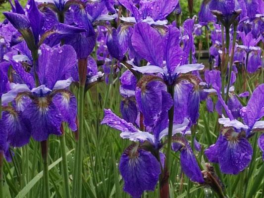 Garten  Flowers