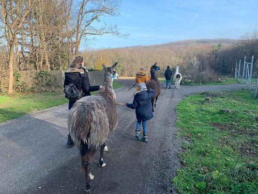 LLamawanderungen, Lamawanderung Niederösterreich, Lamawandern, Lama-Erlebnis, Lamahof, Lama Mama, Sommerein, Niederösterreich