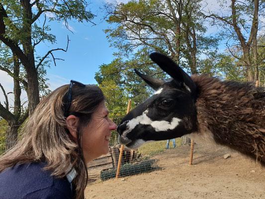 Lama-Kuss, Lamawanderungen, Lamawanderung Niederösterreich, Lamawandern, Lama-Erlebnis, Lamahof, Lama Mama, Sommerein, Niederösterreich