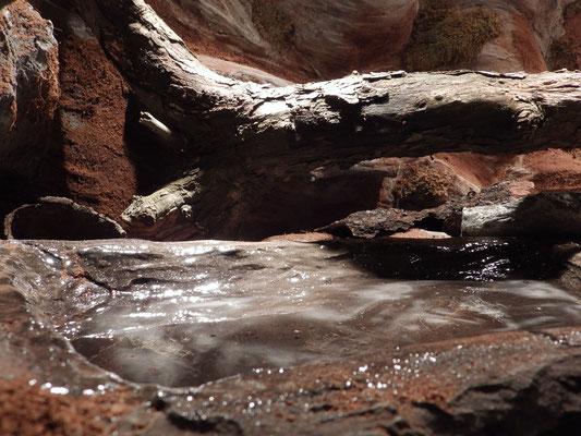 Wasserbecken im Terrarium