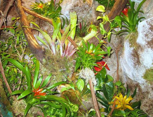 Tropen / Regenwaldterrarium