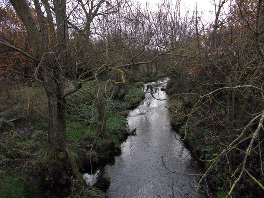 Plantsbrook in the New Hall Valley country park - photograph on Vinneyman's blogspot