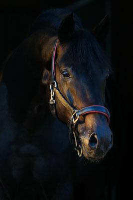 DSP Quadroneur Portrait