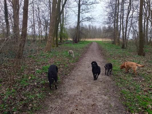 Honden Uitlaten  Hondenuitlaatservice