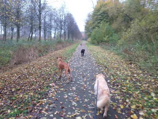 Hondenuitlaatservice Hoogvliet Poortugaal Rhoon