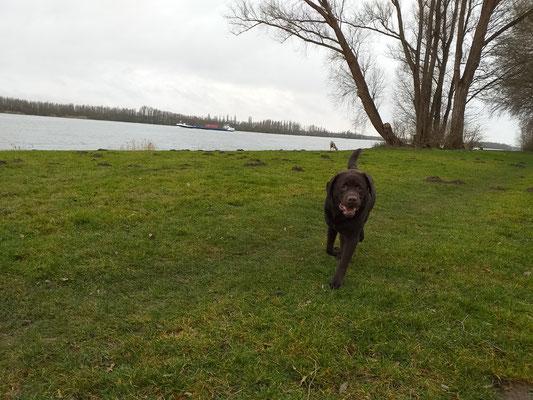 Hondenuitlaatservice Rhoon