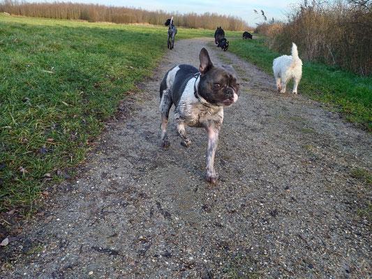 Hondenuitlaatservice Hoogvliet Rhoon Poortugaal