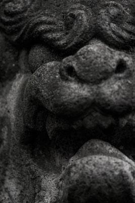 誰かが撮ってた狛犬さん。河津桜撮影会でも他のものに目が行くのは素晴らしい。