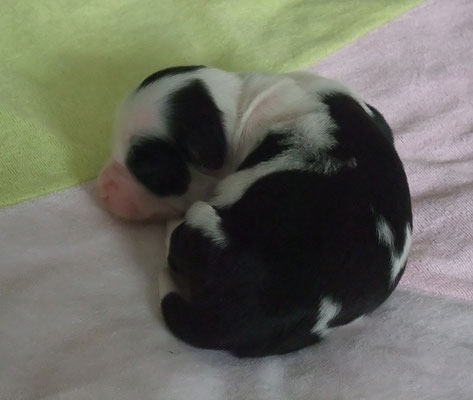 Femelle N°3 - 1 Semaine