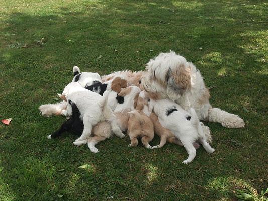 5 Semaines en famille