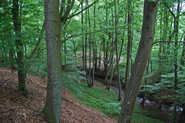 Ein Landschaftliches Kleinod - die (noch) naturbelassene Bachschlucht des Höftgraben