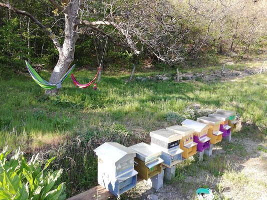 Le api di Elisa nella sua oasi nel verde