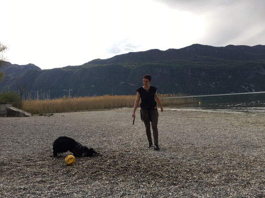 Session de médiation canine avec Sandrina, coach professionnelle à Avignon