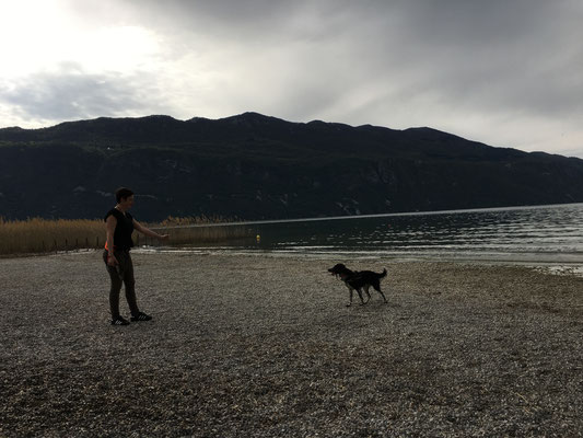 Médiation canine, source de reussite