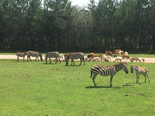 Transportes Escolares Alvarado en Africam Safari Puebla
