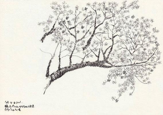 ニッセイビル -Japan (2008.4.6 SUN)