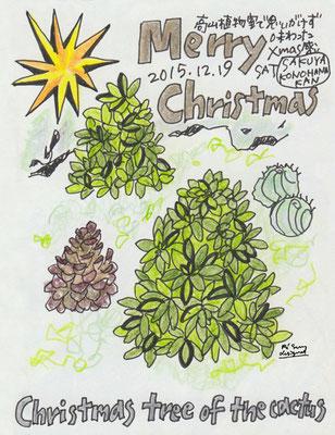 Christmas tree of the cactus (2015.12.19SAT)
