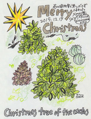 Christmas tree of the cactus (2015.12.19SAT)