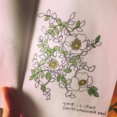 咲くやこの花館 botanical garden (2015.12.19SAT)