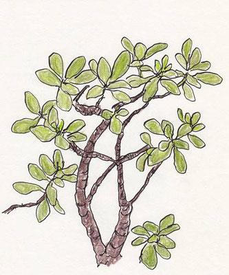 foliage plant (2014.10)