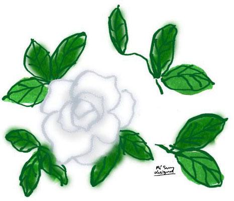 【クチナシ】 -gardenia